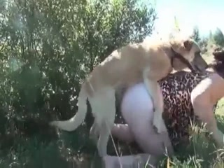 Taking a dog going out and fucking orgy him - Dog fuck free porn