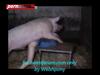 Man having sex female pig