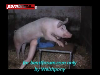 Pig Sex with girl