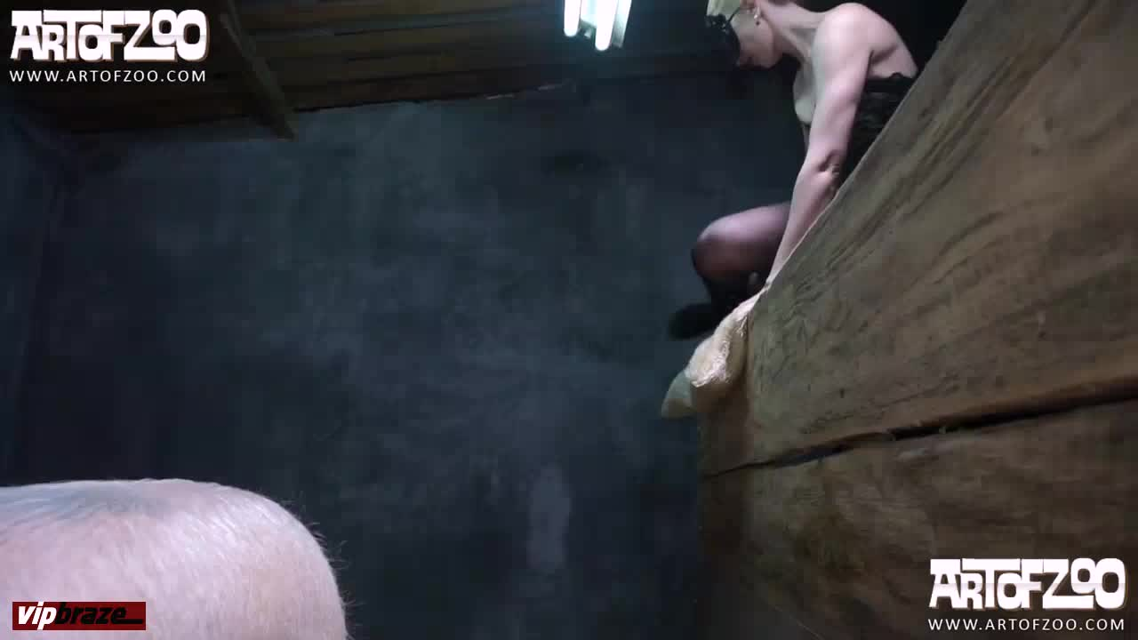 Animal Hd Porn zoo] artofzoo pig porn girl sex animal hd porn | free