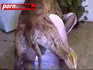 Dog knot in pussy porn